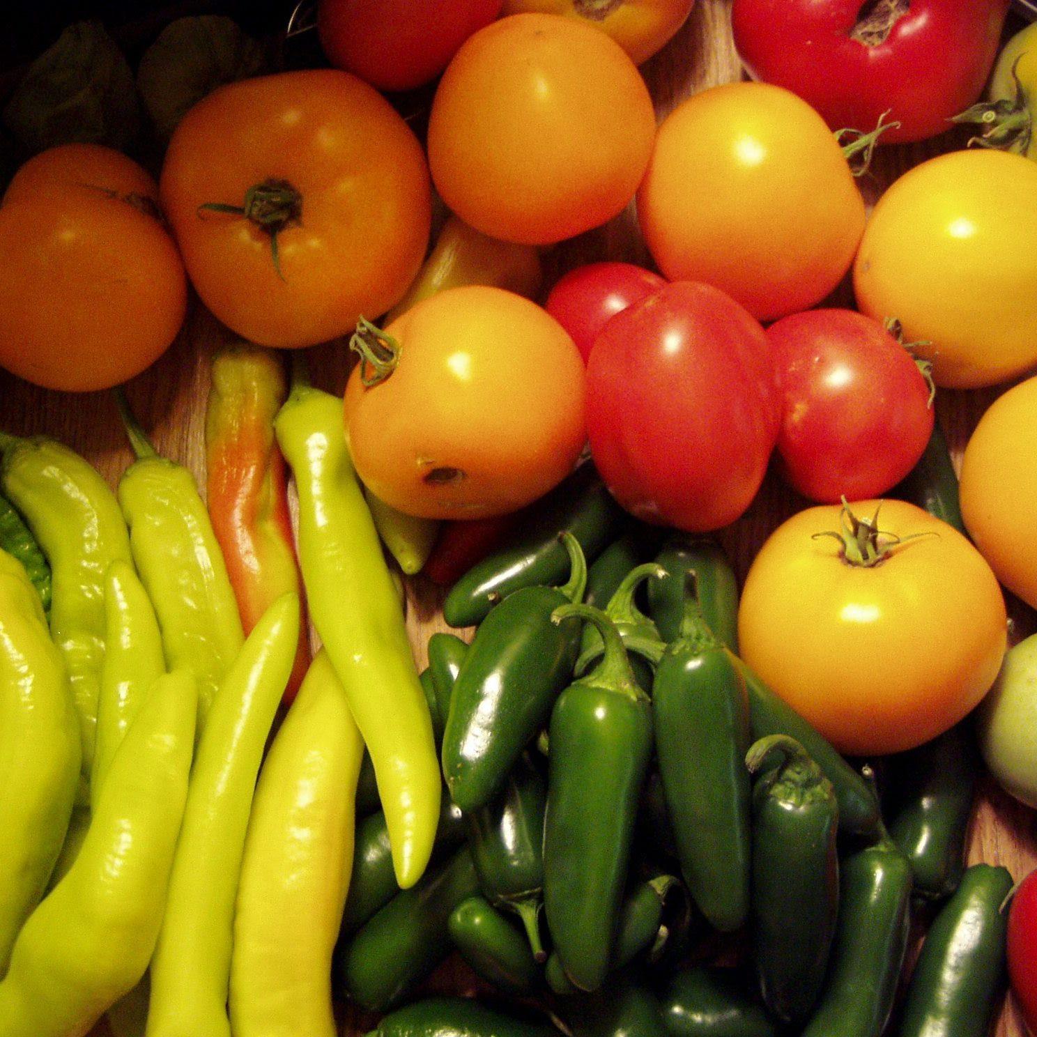 En esta imagen se muestra una variedad de vegetales producidos con hidropnia